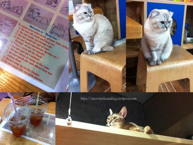 catcafe1