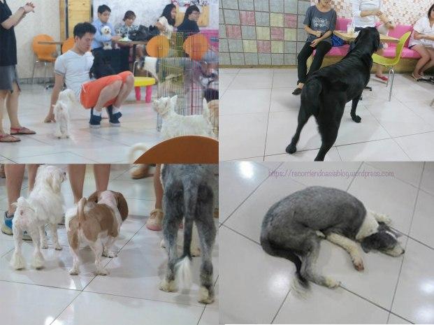 dogcafe1